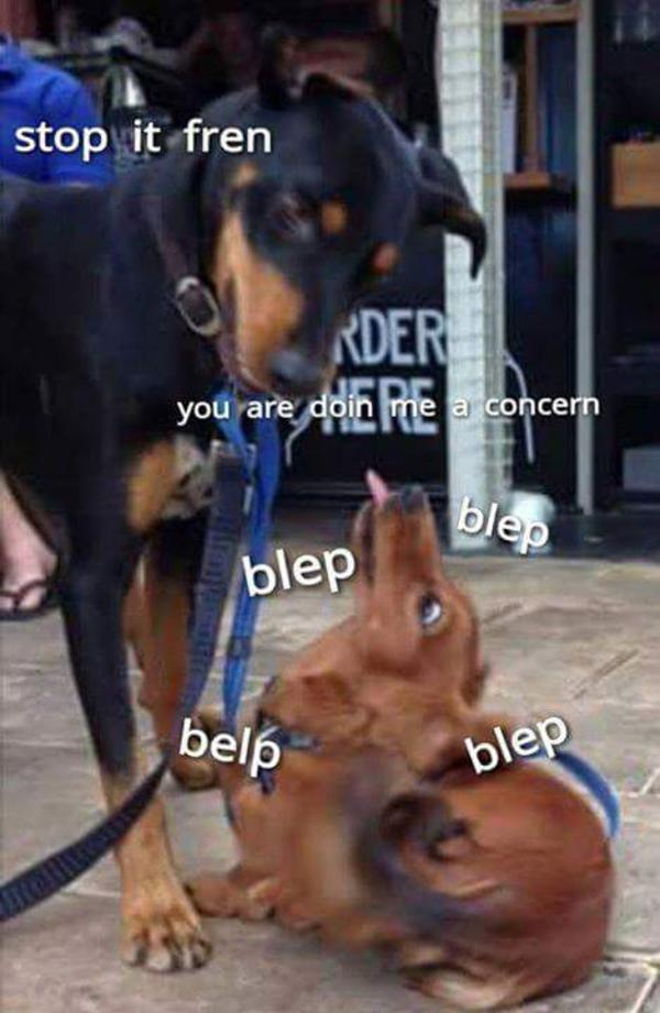 Stop it son you are doing me a frighten know your meme doing me the shock stop it fren der youae dbin e pie concern blep belp blep solutioingenieria Images