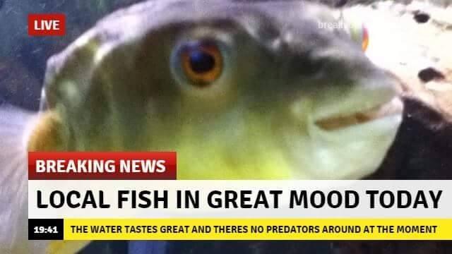 Redneck Seafood   memes.com