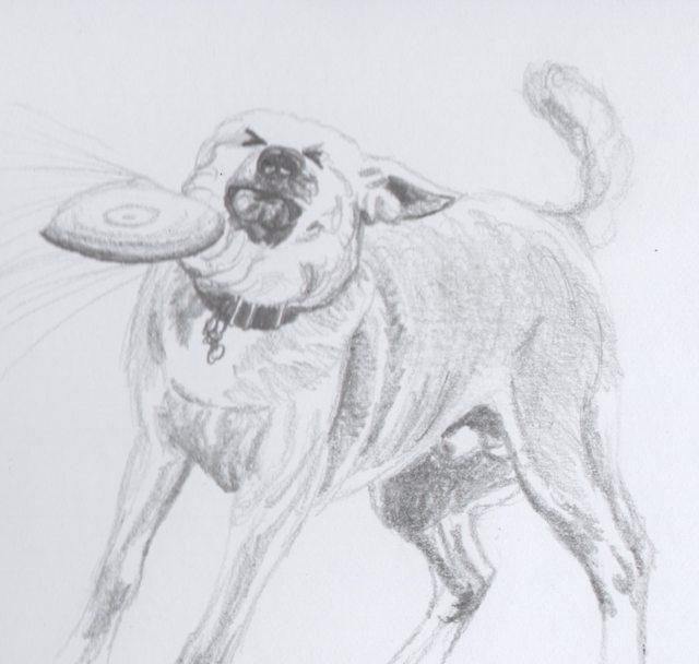 4c2 artistic sketch frisbee doge know your meme
