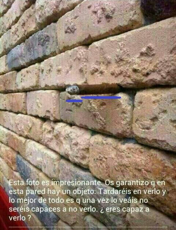 Wall Photo brick wall optical illusion | know your meme