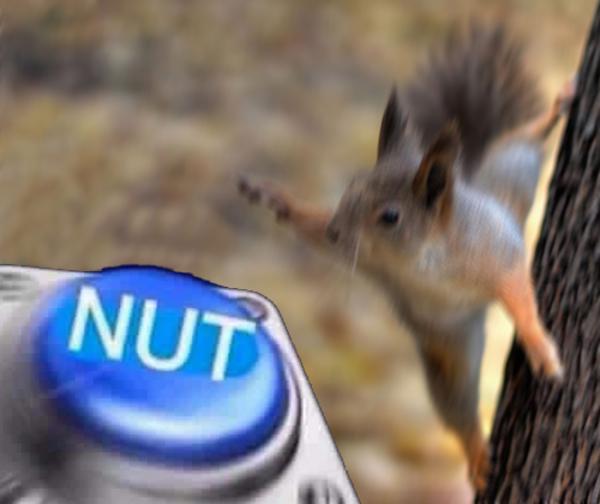 106 squirrel nut nut button know your meme,Squirrel Meme Nuts