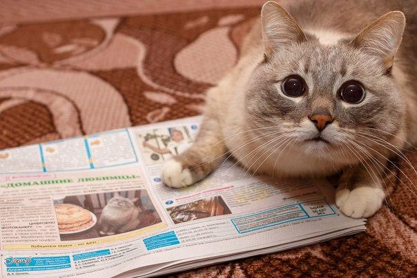 912 blini cat with newspaper blini cat know your meme