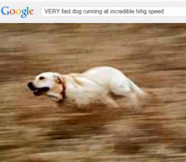 17f very fast doggo running at incredible hihg speed know your meme