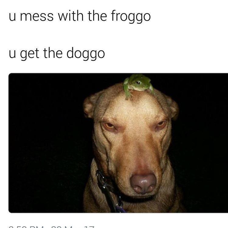 Froggo Doggo | You Mess With Crabo, You Get a Stabo | Know ...