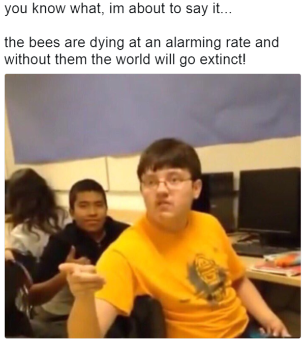 620 bees are dying at an alarming rate image gallery know your meme