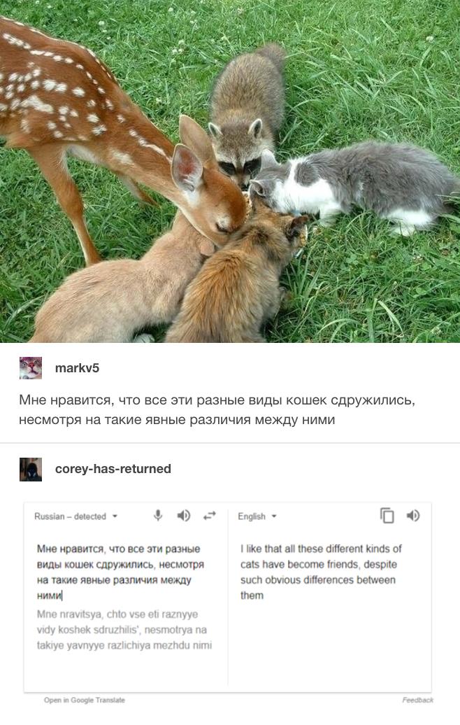 Кот с английского на русский