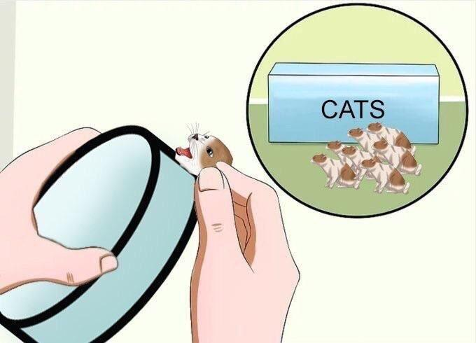 7e4 cats for your pill pills that make you stare know your meme