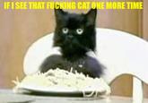 Spaghetti Cat
