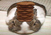 Pancake Bunny