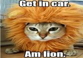 Jesus Christ It's a Lion Get In The Car!
