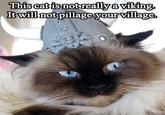 Average Cats
