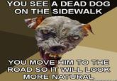 Cynical Dog