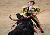 Bull Piercing