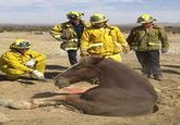 Sewer Horse/Basement Horse