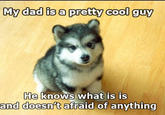 Baby Courage Wolf