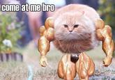 1288565220120 bullet cat know your meme