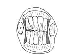 Teethguy