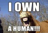 I Own a Horse