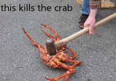 This Kills The Crab