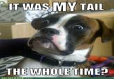 Dumbstruck Dog