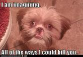 Trauma Dog
