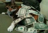 CashCats