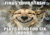 Stoner Dog