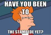 Have you been to the stampede yet?