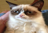 Grumpy Cat