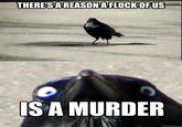 Insanity Crow
