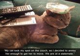 Cat Buckaroo
