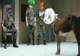 Goat-tan