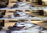 Pun Dog