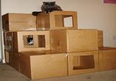 Cat Fort