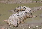 Alice Spring Reptile Center Killings