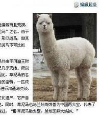 Baidu 10 Mythical Creatures (Grass Mud Horse)