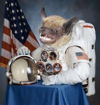 Space Bat