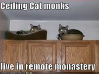 Funny-pictures-ceiling-cat-monks-cupboards