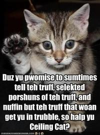 Funny-pictures-kitten-takes-an-oath