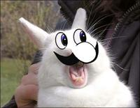 Bunnyfaic