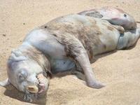 Montauk-monster