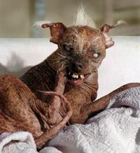 Sam the World's Ugliest Dog