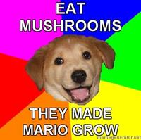 Advice-dog_mushrooms