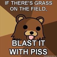 Youth-mentor-bear-if-theres-grass-on-the-field--blast-it-with-piss