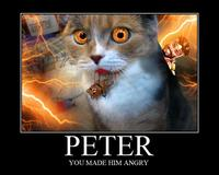 Peter the Cat (The King of /b/)