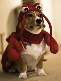 lobsterdog1.jpg