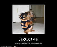 Cute-puppy-pictures-groove-feeling