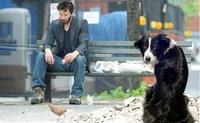 Apathetic-dog-doesnt-care-that-keanu-reeves-9720-1277103058-2