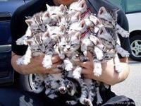 kitten huffing