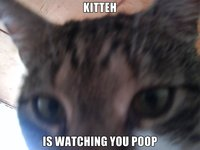 Kitteh-is-watching-you-poop